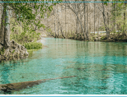 Freshwater Springs in the Florida Panhandle